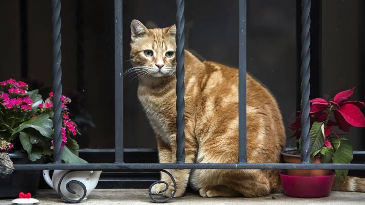 Le hicieron el examen de coronavirus a un gato, dio positivo y quedó internado