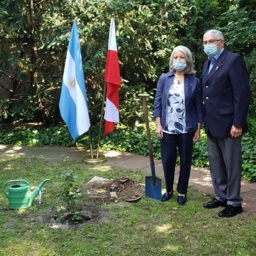 """Plantaron un abedul en la Embajada Argentina en Polonia por la campaña """"Un árbol por los 649 caídos en Malvinas"""""""